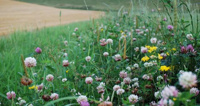 Bases para una plataforma de ciencia ciudadana sobre biodiversidad